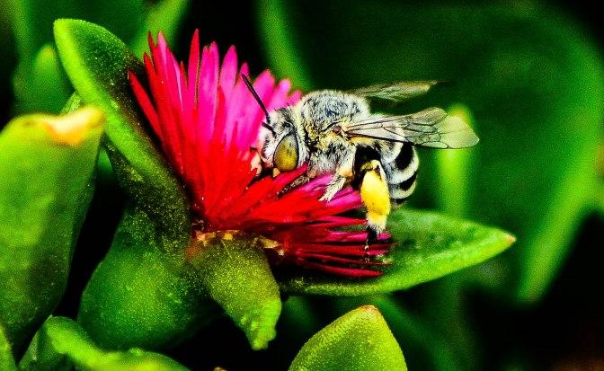 Beautiful Wild Bee