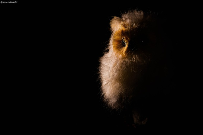 Owl  (Low key photography)