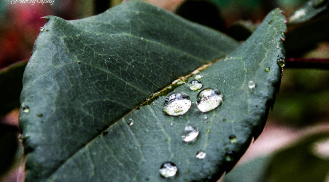 Drops on leave